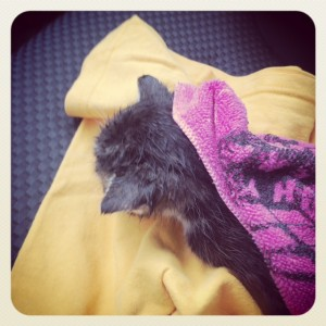 It might be a long road back for the kitten, but here he's warming up on the way to the animal hospital.