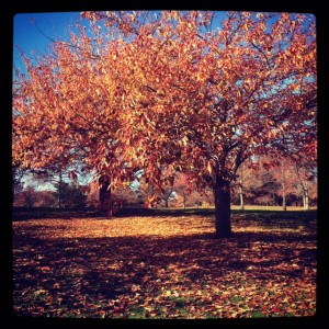 Fall was still hanging around in Jersey.